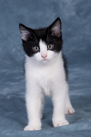 Kitten 1B