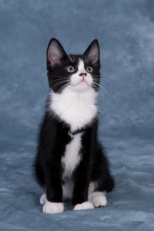 Kitten 4D