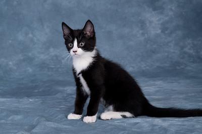 Kitten 4B
