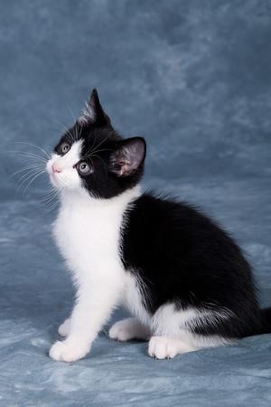 Kitten 1G