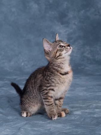 Kitten 3B