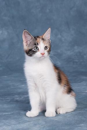 Kitten 5F