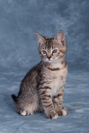 Kitten 3E