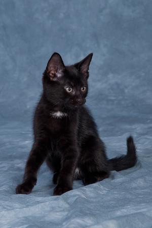 Kitten 2B