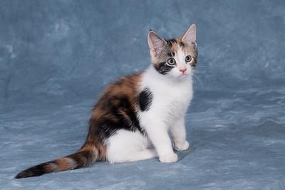 Kitten 5B