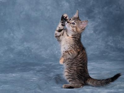 Kitten 3A