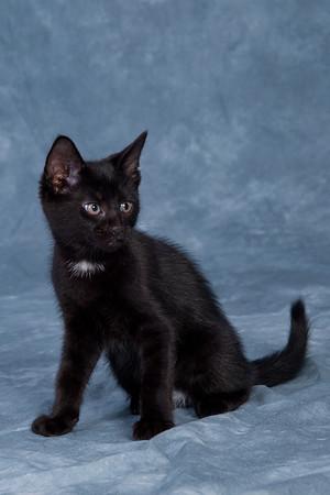 Kitten 2A