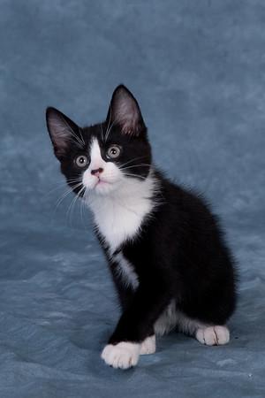 Kitten 4E