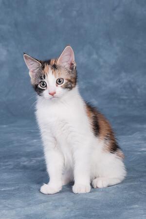 Kitten 5E