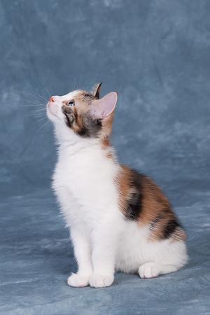 Kitten 5G