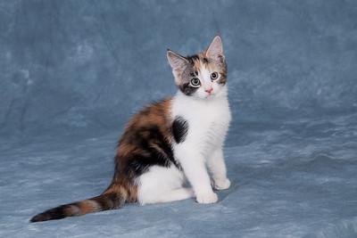 Kitten 5A
