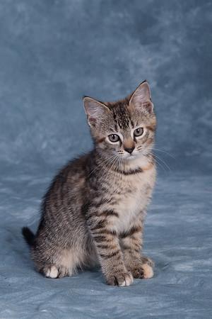 Kitten 3C
