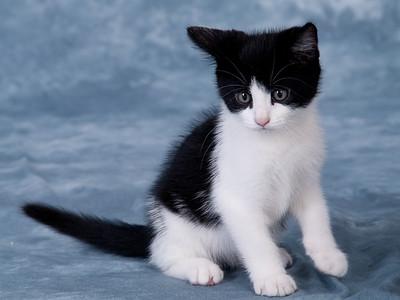 Kitten 1D