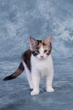Kitten 5D
