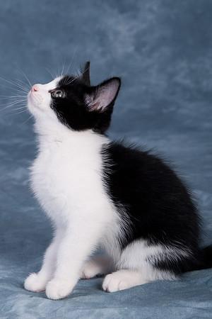 Kitten 1F