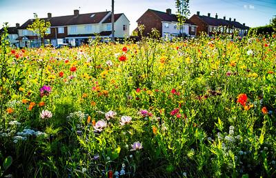 Roseworth Big Local-2681