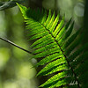 "Sunlit Fern  <div class=""ss-paypal-button""><a href=""http://form.jotform.co/form/32671195496868?photoName=Sunlit%20Fern&photoLink=http%3A%2F%2Fwww.sherlockphotography.org%2FCustomisations%2FPayPal%2FAdvanced%2FJot-forms-example%2Fi-Q2c4GVT"" target=""_blank"" id=""yui_3_12_0_1_1380115014226_204"">  Click here to place an order for this photo </a></div><div class=""ss-paypal-button-end"" style=""display:none""></div>"