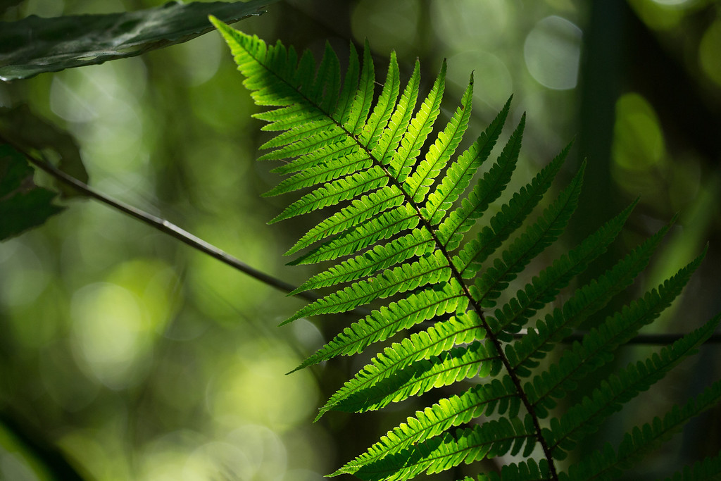 """Sunlit Fern  <div class=""""ss-paypal-button""""><div class=""""ss-paypal-add-to-cart-section""""><div class=""""ss-paypal-product-options""""><h4>Print sizes</h4><ul><li><a href=""""https://www.paypal.com/cgi-bin/webscr?cmd=_cart&business=NQUBC9HUK3AKJ&lc=NZ&item_name=Sunlit%20Fern&item_number=http%3A%2F%2Fwww.sherlockphotography.org%2FCustomisations%2FPayPal%2FExample-cart-gallery%2Fi-SMQHGBP&button_subtype=products&no_note=0&cn=Add%20special%20instructions%20to%20the%20seller%3A&no_shipping=2&currency_code=USD&shipping=0.00&add=1&bn=PP-ShopCartBF%3Abtn_cart_LG.gif%3ANonHosted&on0=Print%20sizes&option_select0=4x6&option_amount0=0.01&option_select1=8x12&option_amount1=0.02&option_select2=16x25&option_amount2=0.04&option_index=0&submit=&os0=4x6"""" target=""""paypal""""><span>4x6 $0.01 USD</span><img src=""""https://www.paypalobjects.com/en_US/i/btn/btn_cart_SM.gif""""></a></li><li><a href=""""https://www.paypal.com/cgi-bin/webscr?cmd=_cart&business=NQUBC9HUK3AKJ&lc=NZ&item_name=Sunlit%20Fern&item_number=http%3A%2F%2Fwww.sherlockphotography.org%2FCustomisations%2FPayPal%2FExample-cart-gallery%2Fi-SMQHGBP&button_subtype=products&no_note=0&cn=Add%20special%20instructions%20to%20the%20seller%3A&no_shipping=2&currency_code=USD&shipping=0.00&add=1&bn=PP-ShopCartBF%3Abtn_cart_LG.gif%3ANonHosted&on0=Print%20sizes&option_select0=4x6&option_amount0=0.01&option_select1=8x12&option_amount1=0.02&option_select2=16x25&option_amount2=0.04&option_index=0&submit=&os0=8x12"""" target=""""paypal""""><span>8x12 $0.02 USD</span><img src=""""https://www.paypalobjects.com/en_US/i/btn/btn_cart_SM.gif""""></a></li><li><a href=""""https://www.paypal.com/cgi-bin/webscr?cmd=_cart&business=NQUBC9HUK3AKJ&lc=NZ&item_name=Sunlit%20Fern&item_number=http%3A%2F%2Fwww.sherlockphotography.org%2FCustomisations%2FPayPal%2FExample-cart-gallery%2Fi-SMQHGBP&button_subtype=products&no_note=0&cn=Add%20special%20instructions%20to%20the%20seller%3A&no_shipping=2&currency_code=USD&shipping=0.00&add=1&bn=PP-ShopCartBF%3Abtn_cart_LG.gif%3ANonHosted&on0=Print%20sizes&opt"""