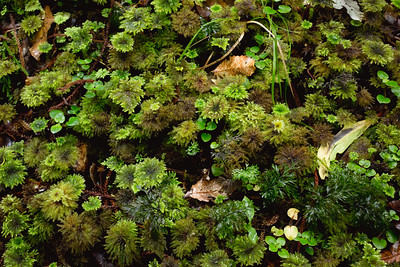 Carpet of moss on the forest floor