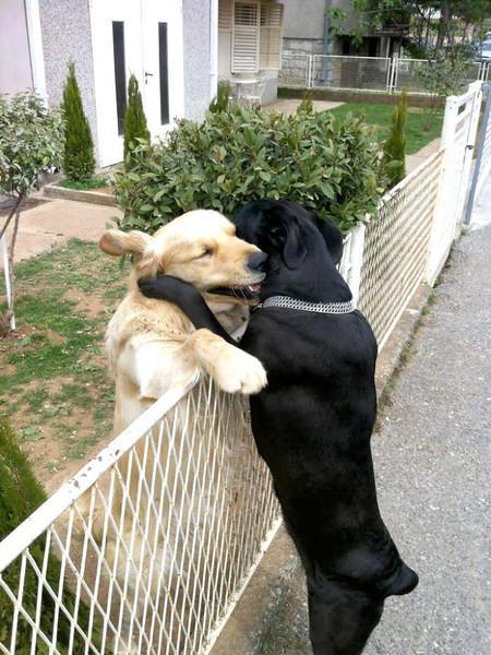 Endearment across the fence