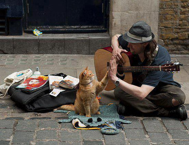 Musician and Cat