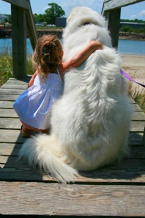 Little Girl and Big Dog