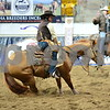 1-gold cup open non pro 1st herd 042