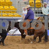 1-aqha senior horse plus presentaion 076
