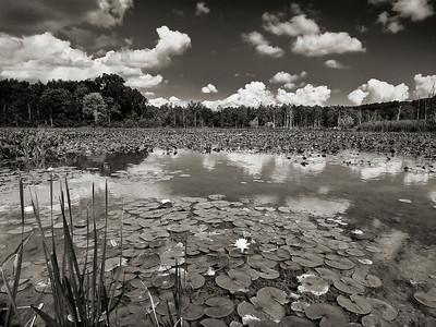 Beaver Marsh Cloudscapes - Aug. 29, 2009