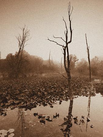 Beaver Marsh Sunrise - June 14, 2009