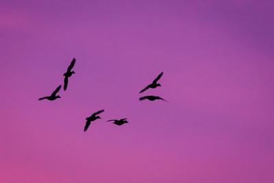 Energy of Flight