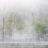 Beaver Marsh Fog