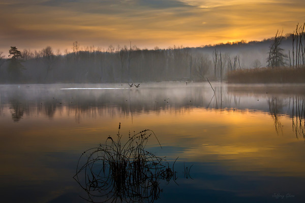 Dawn's Light at Beaver Marsh