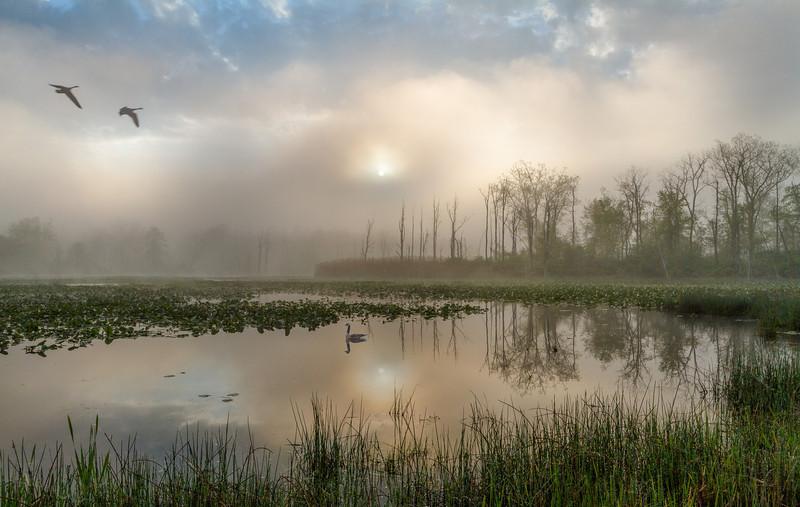 Foggy Sunrise at Beaver Marsh