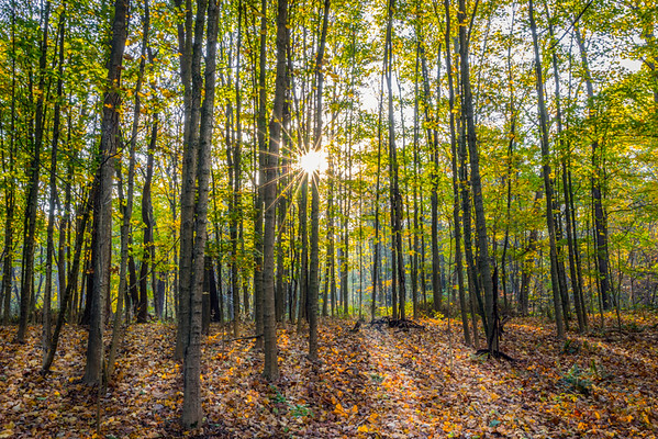 Maplewood Picnic Area