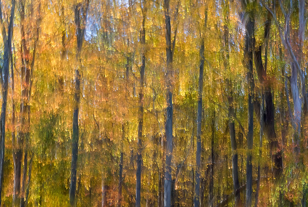 Abstract Maples