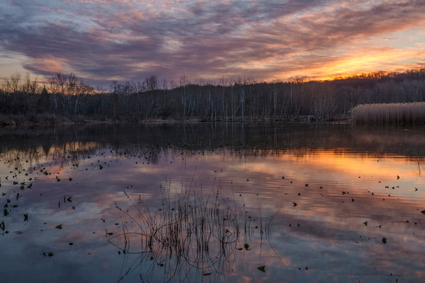 Early Dawn at Beaver Marsh
