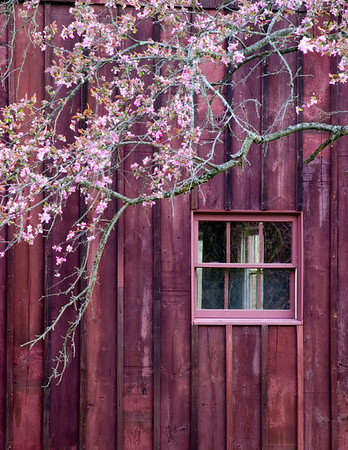 Barn and Redbud  Selected for the 2009 Cuyahoga Valley National Park Calendar.