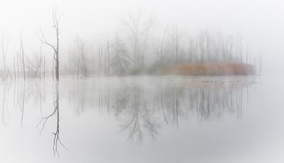 Morning Fog at Beaver Marsh