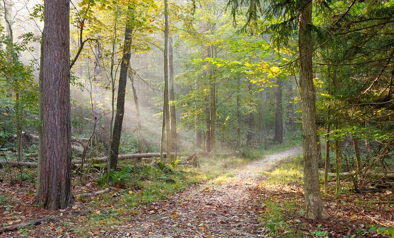 Trail at Virginia Kendall