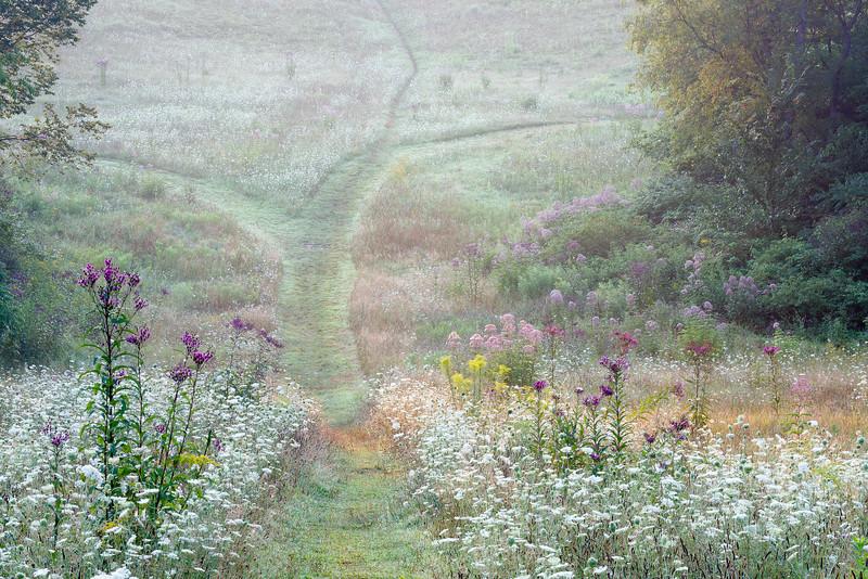 Virginia Kendall trails