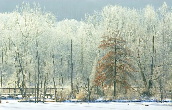 Beaver Marsh Freeze