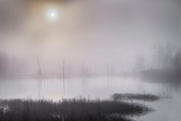 January Morning at Beaver Marsh