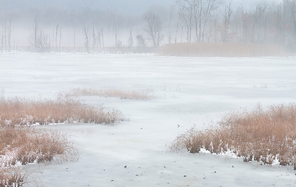 Evening Fog at Beaver Marsh