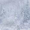 Nature's Winter Beauty