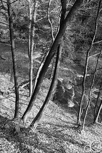 Brandywine Creek, Cuyahoga Valley National Park, April 2016.