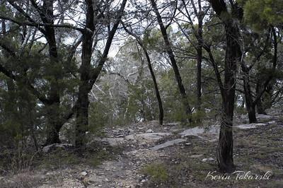 KJT_2005-1-29_0014