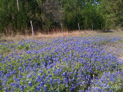 Taken with SmugShot on my iPhone on a bike ride along the road to Anderson 2009-04-10