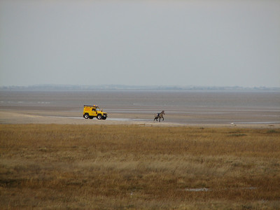 beach patrol chasing horse that had lost its rider