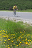 TdF-minded<br /> <br /> Yellow jersey to go with the yellow flowers